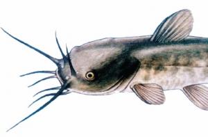 Életem  hala
