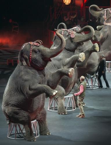 Elefánttalpakat fel!