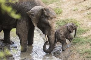 Elefántbika született Nyíregyházán