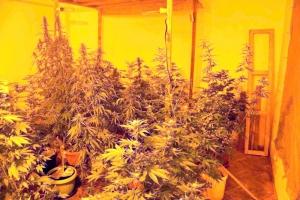Otkrivena ilegalna laboratorija za uzgajanje marihuane
