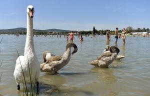 Velencei-tó – Felfüggesztették három fürdőhely működtetését
