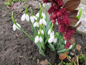A tavasz hirnökei