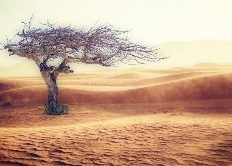 Ha majd kivágtadazutolsó fát...