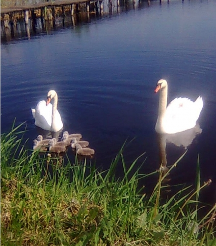 A Ludasi-tó új lakói