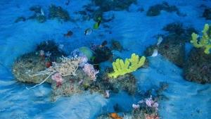 Közzétették az első felvételeket egy hatalmas korallzátonyról