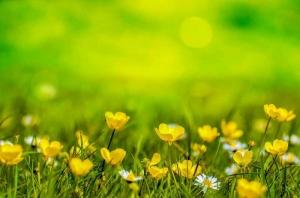 Hova tűnt a sok virág?