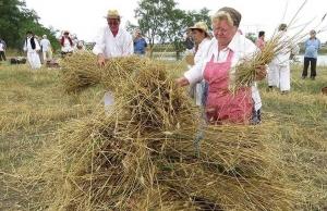 A kézi aratás hagyománya még él