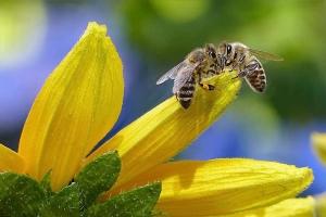 Kirándulás a méz földjén