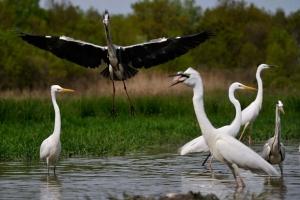 Létkérdés a vizes élőhelyek megőrzése