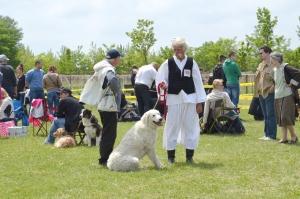 A kutyák szerelmesei májusban Kelebián találkoznak
