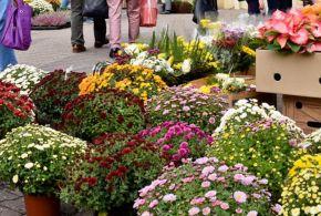 Virágkiállítás és vásár Szabadkán